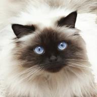 Cat Breed Classifier